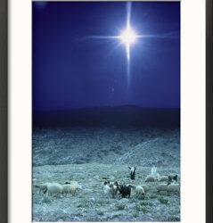 2974827Shepherds-Watch-Their-Flocks-Under-the-Light-from-a-Distant-Star-near-Bethlehem-Israel-Posters