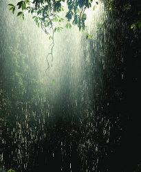 Rain in Australian Rainforest Cairns, Australia