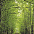 Tree Lined Rural Road --- Image by © Royalty-Free/Corbis