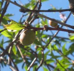 Guest Post: Planting an Orchard