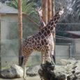 fresno-zoo-etc-057