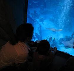 SeaLife Aquarium at Legoland Carlsbad