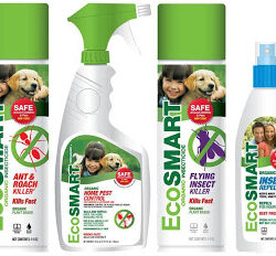 Fight Ants and Other Critters with EcoSmart