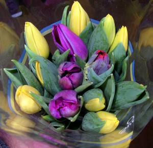 per ola wiberg tulips for easter