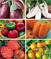 Rainbow Vegetable Garden Giveaway from Burpee
