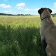 bobmarley753 dog