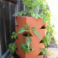 Bio Planter