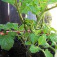 Bio Planter 2