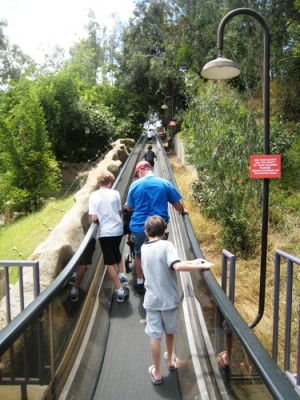 climbing hills at the San Diego Zoo