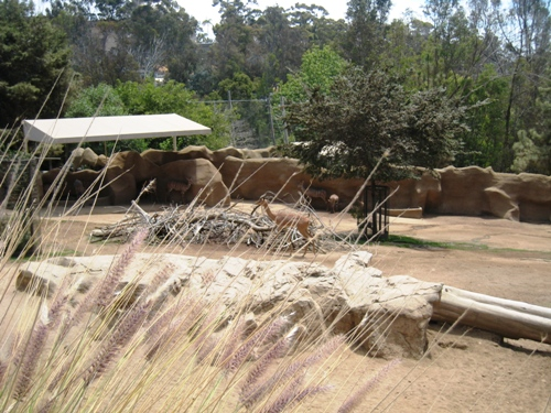 Learning is Everywhere: The San Diego Zoo & A Panda Adventure