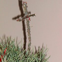 Keeping Christ in Christmas as a Public School Family