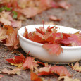 leaf bowl zitona