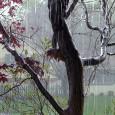 rain laffy4k