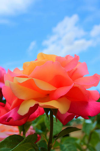 Jesus Made Them Bloom