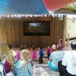 A Visit to the San Diego Zoo Safari Park