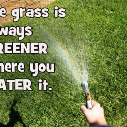 The Grass is Always Greener….