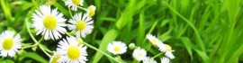 white flowers grass