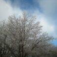 ice storm (2)