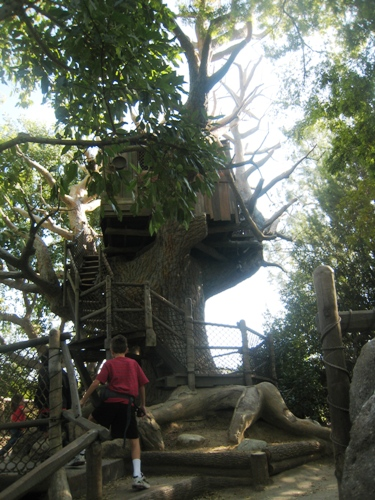 boy treehouse