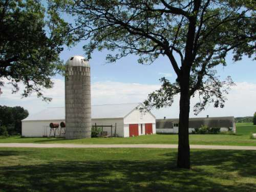A tree in front of a barn and silo