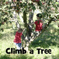 Get Out: Climb a Tree