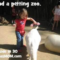 Get Out: Find a Petting Zoo