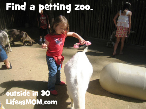 find a petting zoo