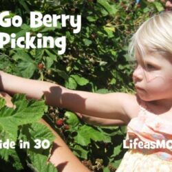 Get Out: Go Berry Picking