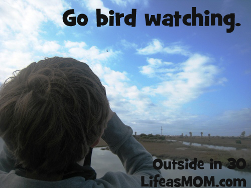go bird watching