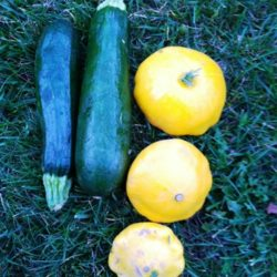 zucchini and summer squash