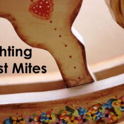 Fighting Dust Mites