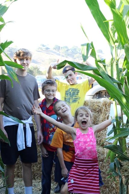 corn maze finishers
