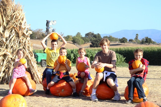 Head to the Pumpkin Patch (Falling for Fun)