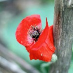 8 Ways to Be Thankful in the Midst of Busy Days | Life as MOM