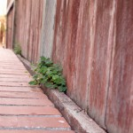 fence with clover