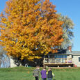 kids fall tree