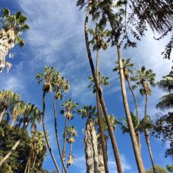 palms in balboa park